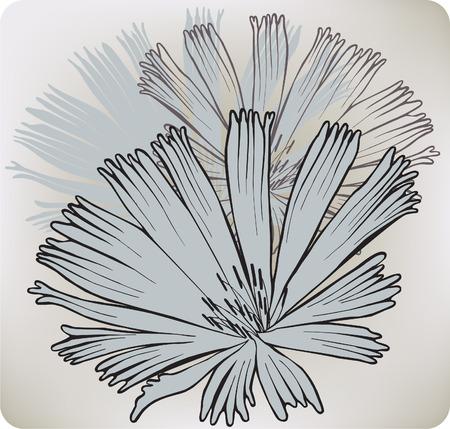 chicory: Chicory flower