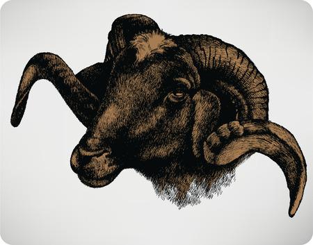 Animal sheep, hand-drawing. Vector illustration. Illustration