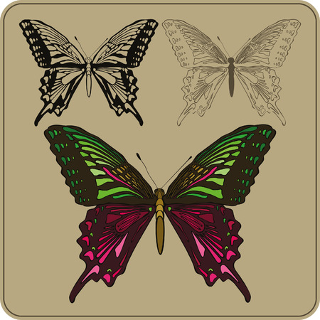 Set of butterflies, hand-drawing. Vector illustration