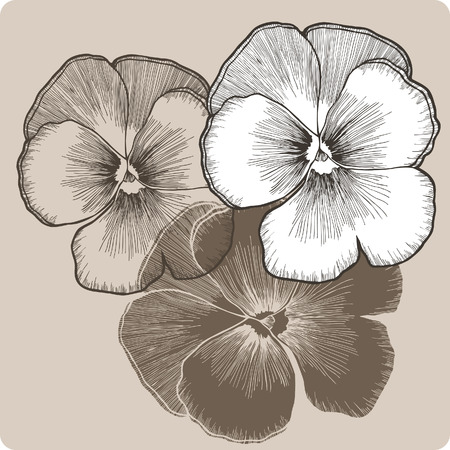 Pansy flower, hand-drawing. Vector illustration.