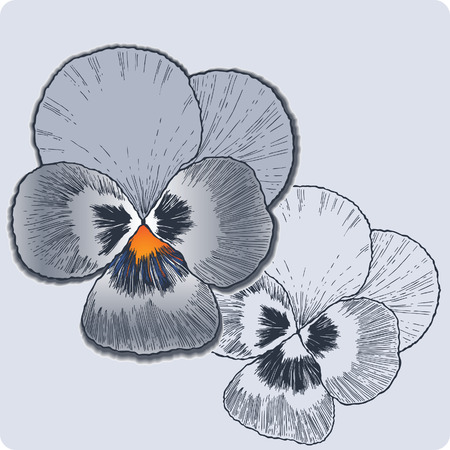 Pansy flower, hand-drawing. Vector.