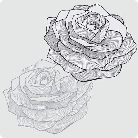 Vintage flower rose, hand-drawing. Vector illustration. Иллюстрация