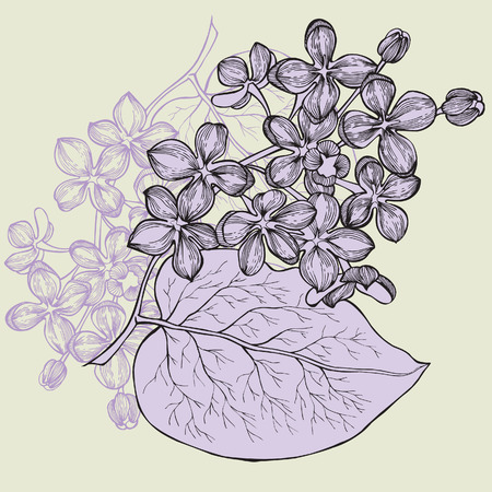 Lilac branch, hand-drawing. Vector illustration.