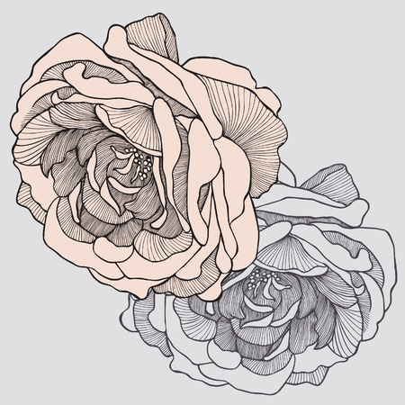hand drawn flower: Tea rose, hand-drawing. Vector illustration.