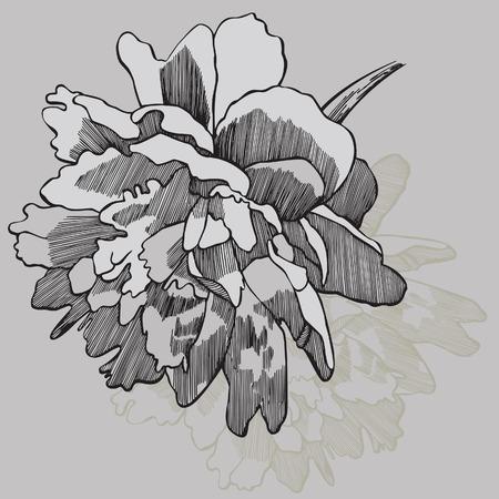 Flower peony, hand-drawing. Vector illustration.