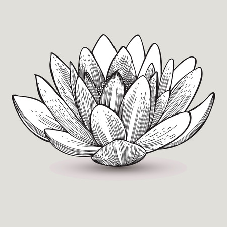 Water lily flower, hand-drawing. Vector illustration.