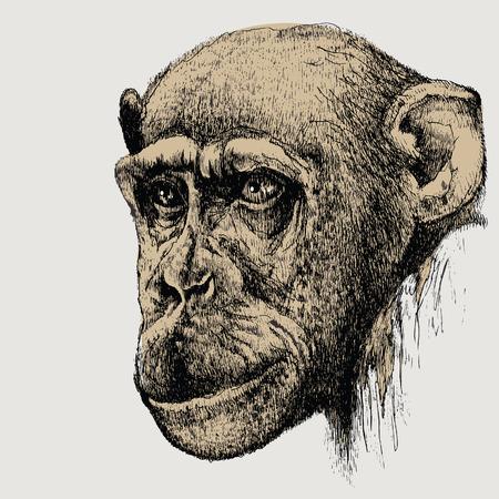 Pet monkey, chimpanzee, hand-drawing. Vector illustration.