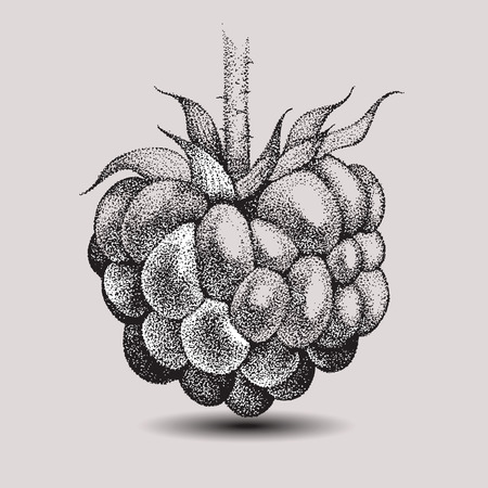 Raspberries, hand-drawing. vector illustration. Иллюстрация