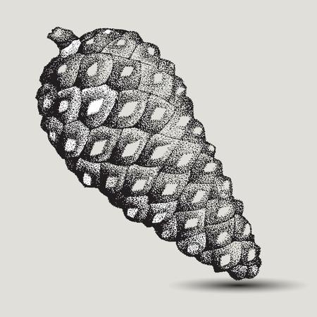 arboles blanco y negro: Abeto cono de pino, dibujo a mano. Ilustración del vector.