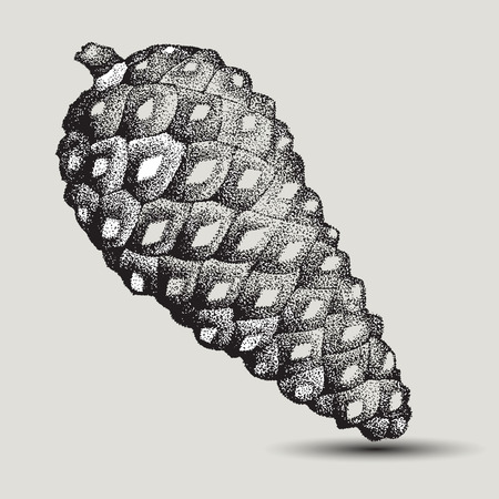 Pine cone spruce, hand-drawing. Vector illustration.
