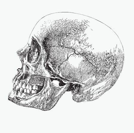 skull of a human in profile, hand drawing, vector illustration.