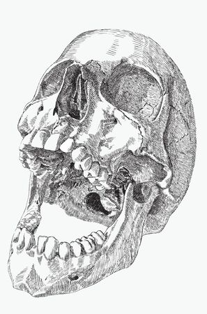 skull of human with an open mouth, hand drawing, vector illustration. Иллюстрация
