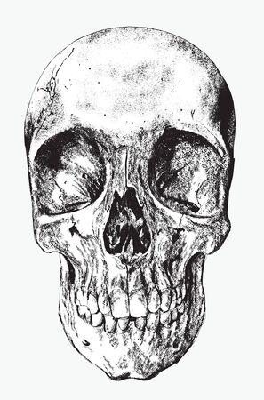 skull of human, hand drawing, vector illustration. Иллюстрация