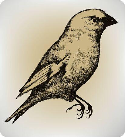 Beautiful bird, hand drawing, vector illustration. Иллюстрация