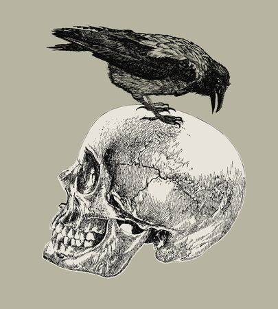 Raven on a human skull. Hand drawing, vector illustration. Archivio Fotografico - 125670717