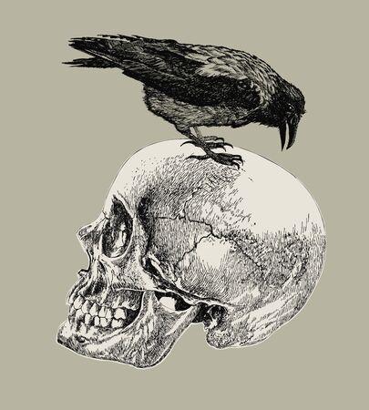Raven on a human skull. Hand drawing, vector illustration.
