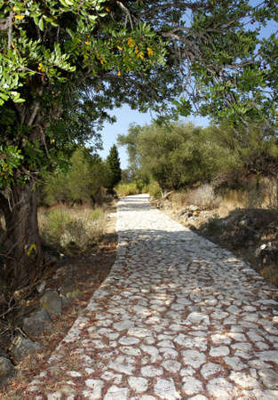 tortuous: cobblestone among olive trees on a sunny day