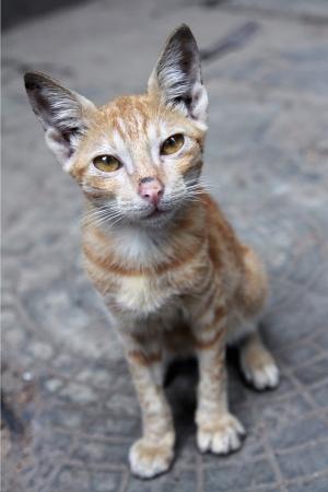 Cute Little Kitten Stock Photo - 21597300