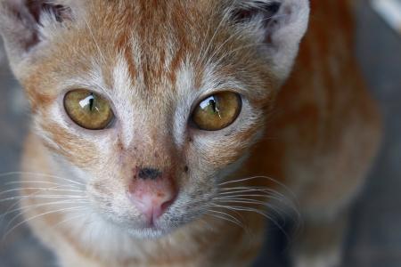 Cute Little Kitten Stock Photo - 21602350