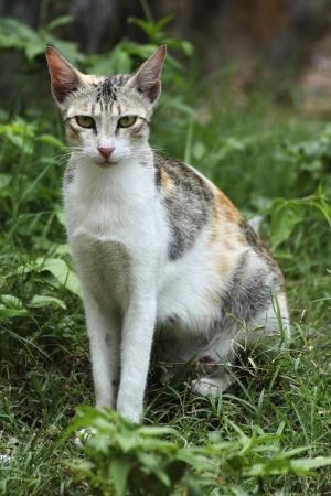 Cat Stock Photo - 21602351