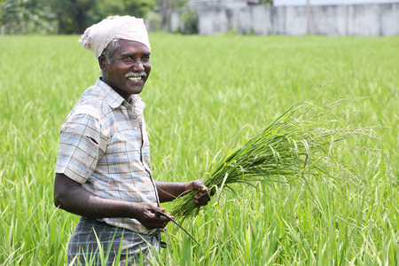Indian Farmer Standard-Bild
