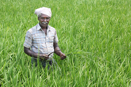 Indian Man Holding sickle and crops