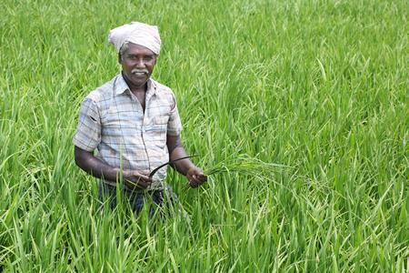 Indiase man met sikkel en gewassen Stockfoto