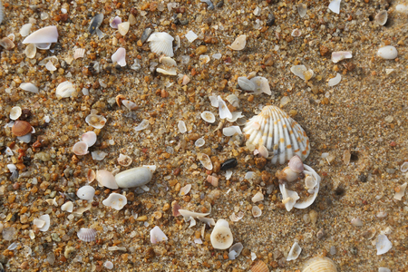 seashell and pearls shell on sand Stock Photo