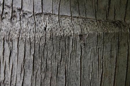 dirt: Bark tree texture Stock Photo