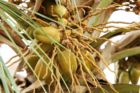 Coconut tree in India Stock Photo