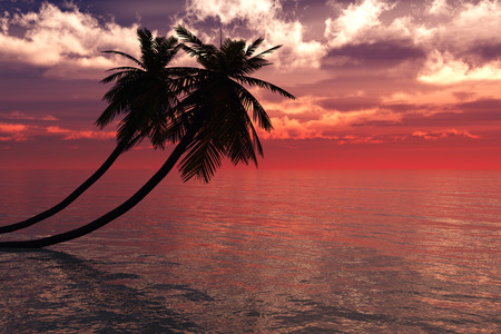 seacoast: Sunrise with Palm Tree - 3D Rendered Image Stock Photo