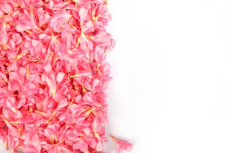 Nerium oleander- pink flowers Stock Photo