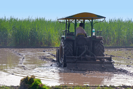 Rice Cultivation - Man with Tractor Stock Photo