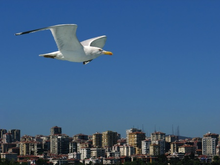 lonely bird: A single seagull on the sky over city Stock Photo