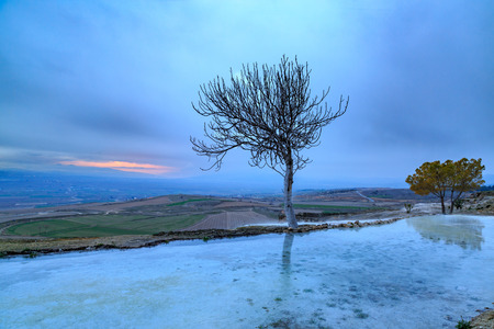 Bare tree with reflection on travertine of Pamukkale