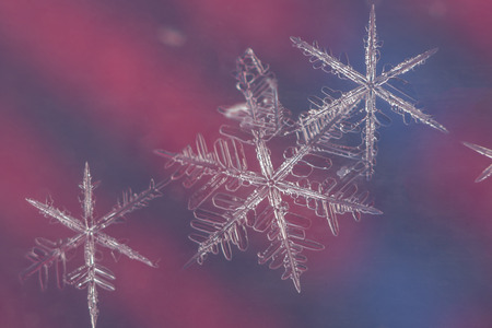 Three snow flakes on red and blue background macro image
