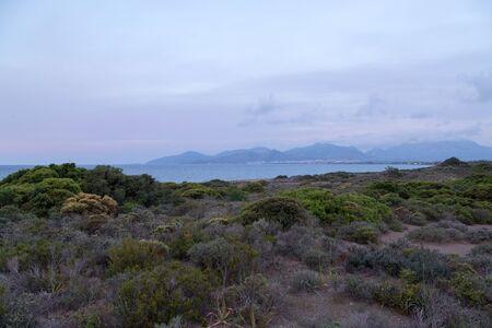 Preserved sand habitat of plants near mediterranean sea in Datca, Turkey
