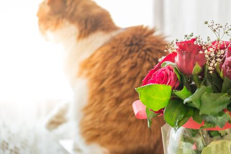 Rose bouquet and ginger cat in distance Archivio Fotografico