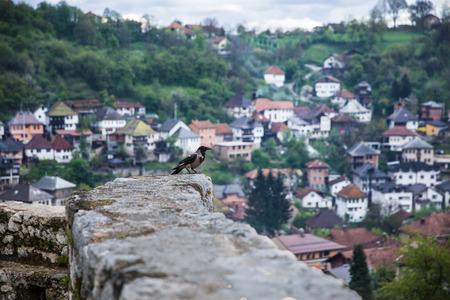 tuzla: Bird on the wall