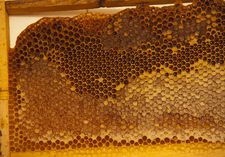 praiseworthy: honeycomb made in from natural flowers