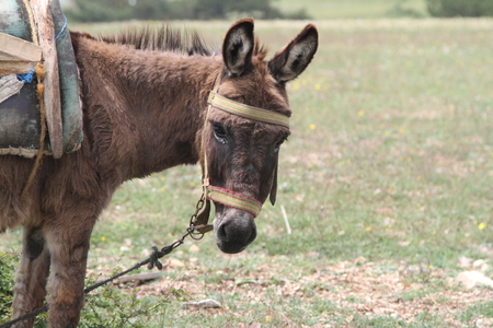 pete: Donkey posing for camera