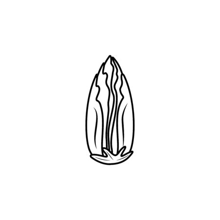 Chicory plant vector icon illustration