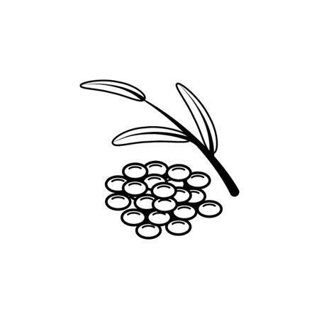 Fresh lentil grains, branch and leaf, linear vector illustration.