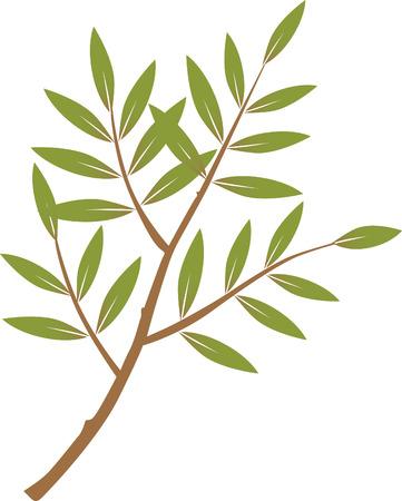 apprehension: Olive Tree
