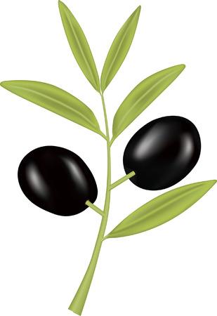 black olive: Black Olive