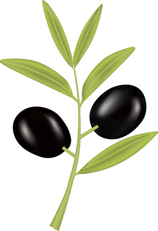 catering: Schwarze Olive