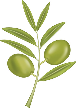 bough: Green Olive