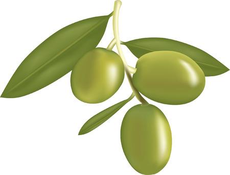 olive leaf: Olivo 4