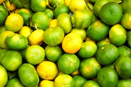 Lots of green unripe tangerines background
