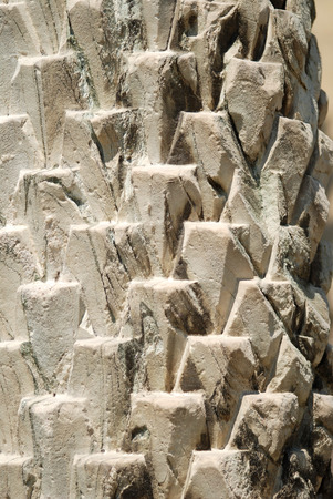 palm tree texture on marble